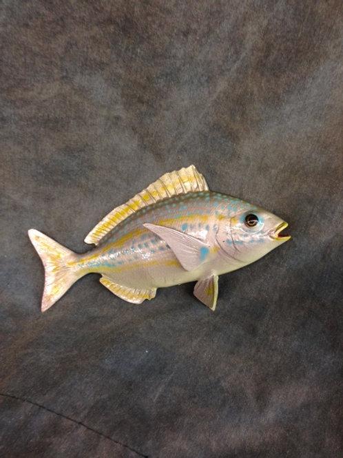 Porgy, Silver-spottail Pinfish