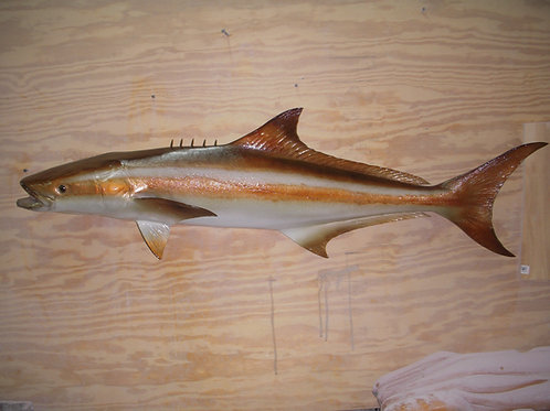 Cobia Ling