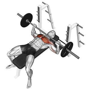 Bench Press, bench press, bench press nasıl ypılır, bench press çalışan kaslr, göğüs egzersizleri, bench press nasıl yapılır