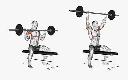 barbell shoulder press, omuz antrenmanı için tavsiyeler, omuz antrenmanı nedir? omuz kası nasıl çalışır