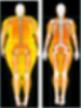 dxa scan yağ oranı, yağ oranı ölçme metotları, yağ oranı nasıl ölçülür, yağ oranı hesaplama, yağ oranı ölçme türleri