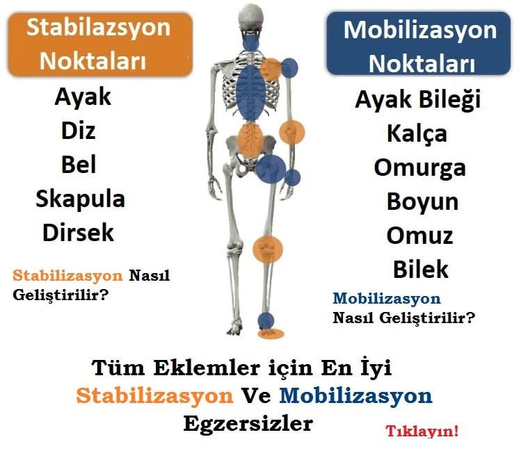 stabilizasyon ve mobilizasyon egzersizleri, stabilite ve mobilite