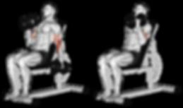 biceps curl, kol egzersizleri, biceps curl nasıl yapılır, biceps curl ilistrasyon, dumbell biceps curl, kol kası, kol anatomisi