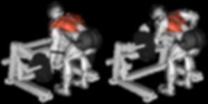 sırt antrenmanı için tavsiyeler, sırt antrenmı, sırt kasları, bentover barbell row nassıl yapılır bentover barbell row çalıştıran kasslar , bentover barbell row, bentover row