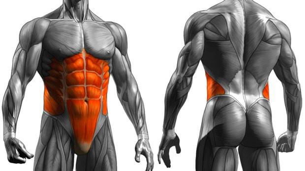 karın kasları, core kasları, abs kasları