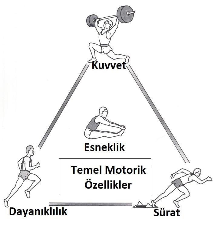 temel motorik özellikler, temel motorik özellikler nelerdir, motorik özellikler