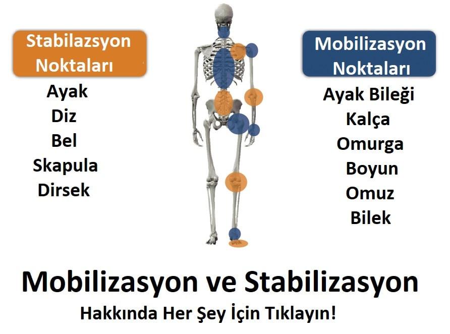 stabilizasyon ve mobilizasyon,  stabilizasyon ve mobilizasyon egzersizleri