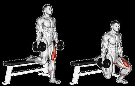 single leg dumbell split squat, split squat, squat, tek bacak squat, squat ilistrasyon, squat yapan adam , single leg squat, split squat, lunge , one leg lunge