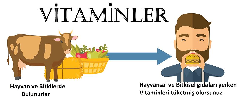 mikro besin ögeleri, vitaminler, en iyi vitaminler