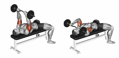 Lying Barbell Triceps Extensions, triceps antrenmanı, triceps kasları tricepss nasıl çalışılır, en iyi triceps hareketleri