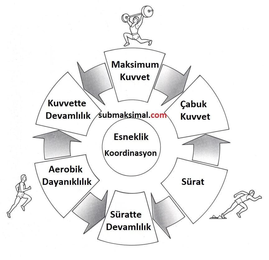 temel motorik özelliklerin birbiriyle ilişkisi, temel motorik özellikler, motorik özellikler