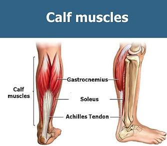 alt bacak kası anatomisi nedir, alt bacak kası anatomisi, alt bacak hangi kaslardan oluşur, alt bacak  kasları, alt bacak muscle, calf, alt bacak çalışırken hangi kaslar çalışır alt bacak anatomy, alt bacak anatomisi inceleme, alt bacak kasları, alt bacak egzersizleri hangi kasları çalıştırır, alt bacak egzersizleri anatomisi, alt bacak egzersizleri, alt bacak kasları, calf, calf anatomy, calf raise, calf kası