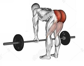 kalça kası anatomisi, kalça kası rehberi, en iyi kalça hareketleri, kalça nasıl çalıştırılır, kalça kası anatomisi, kalça kasları için dikkat edilecek noktalar, kalça kası için en iyi hareketler, en iyi kalça egzersizleri, kalça kaslarımı nasıl büyütebilirim, deadlift, hip muscle, kalça kasları, gluteys maxsimus, gluteus kasları, deadlift nasıl yapılır