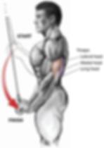 arka kol kası anatomisi nedir, arka kol kası anatomisi, arka kol hangi kaslardan oluşur, arka kol kasları, triceps uzun başı, triceps kısa başı, arka kol çalışırken hangi kaslar çalışır triceps anatomy, arka kol anatomisi inceleme, arka kol kasları, arka kol egzersizleri hangi kasları çalıştırır, arka kol egzersizleri anatomisi, arka kol egzersizleri  triceps kası anatomisi nedir, triceps kası anatomisi, triceps hangi kaslardan oluşur, triceps kasları, triceps muscle triceps, triceps çalışırken hangi kaslar çalışır triceps anatomy, triceps anatomisi inceleme, triceps kasları, triceps egzersizleri hangi kasları çalıştırır, triceps egzersizleri anatomisi, triceps egzersizleri