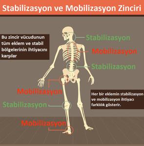 stabilizasyon ve mobilizasyon zinciri, stabilizasyon ve mobilizasyon , Joint by Joint Yaklaşımı