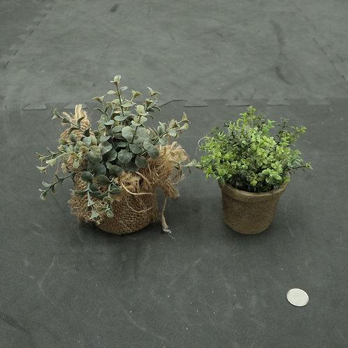 2 plantes décoratives