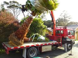Palms on Hiab