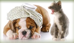 Η Νοσηλευτική Μικρών Ζώων | Σεμινάριο στην Αθήνα | Σάββατο 27 Ιανουαρίου 2018