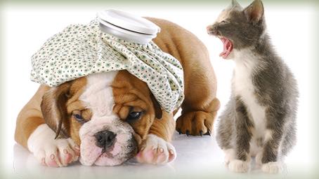 Νοσηλευτική Μικρών Ζώων | Σεμινάριο | Κυριακή 16 Δεκεμβρίου 2018