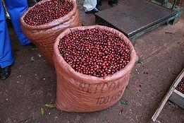 ethiopia gotiti2.jpg
