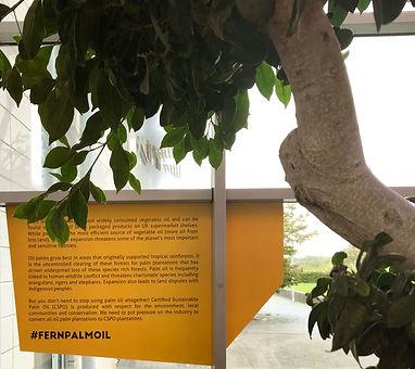 Fern palm oil Installation UWE