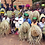Thumbnail: UDONGO: Ethically woven storage baskets