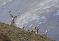 Glenlivet wildlife