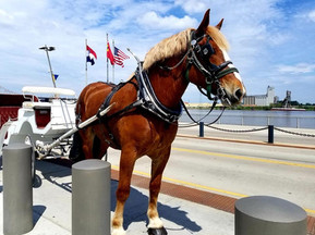 Brookdale Farms horse drawn carriage at St. Louis riverfront