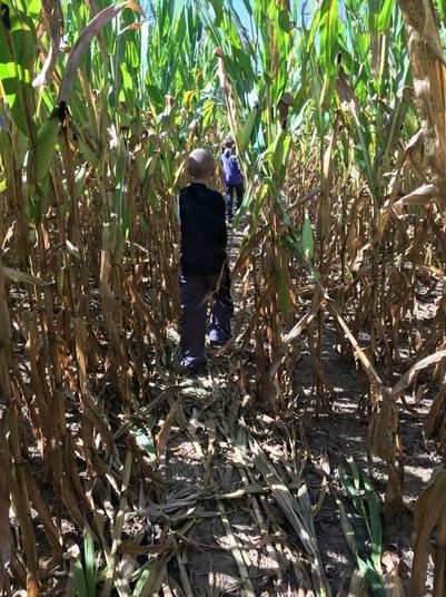 Fall corn maze activity for kids - Brook
