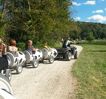 Cow Trains at Brookdale Farms