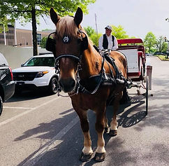 Chevy, Brookdale Farms Carriage services chestnut horse