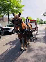 Brookdale Farms horse drawn carriage at St. Louis event