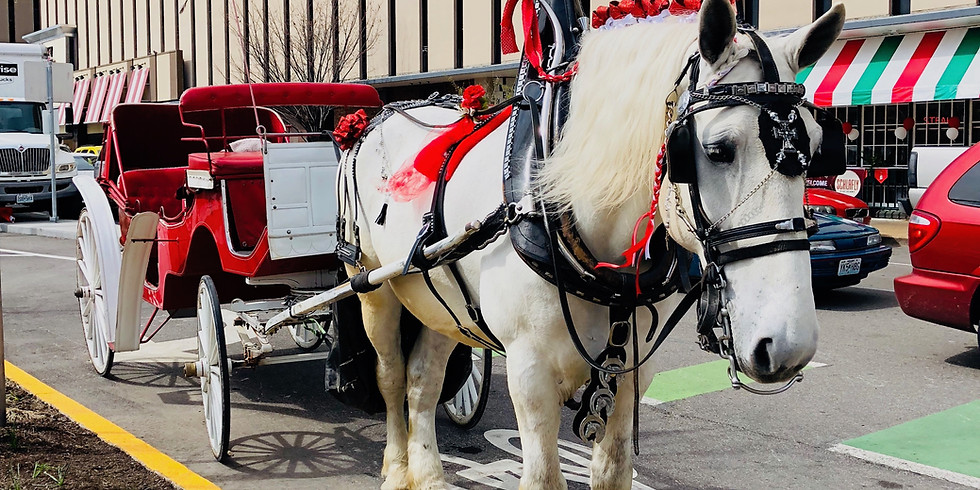 Gift Certificate: 30-Min Horse-Drawn Carriage