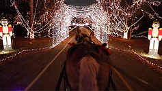 Brookdale horse carriage at Celebration of Lights
