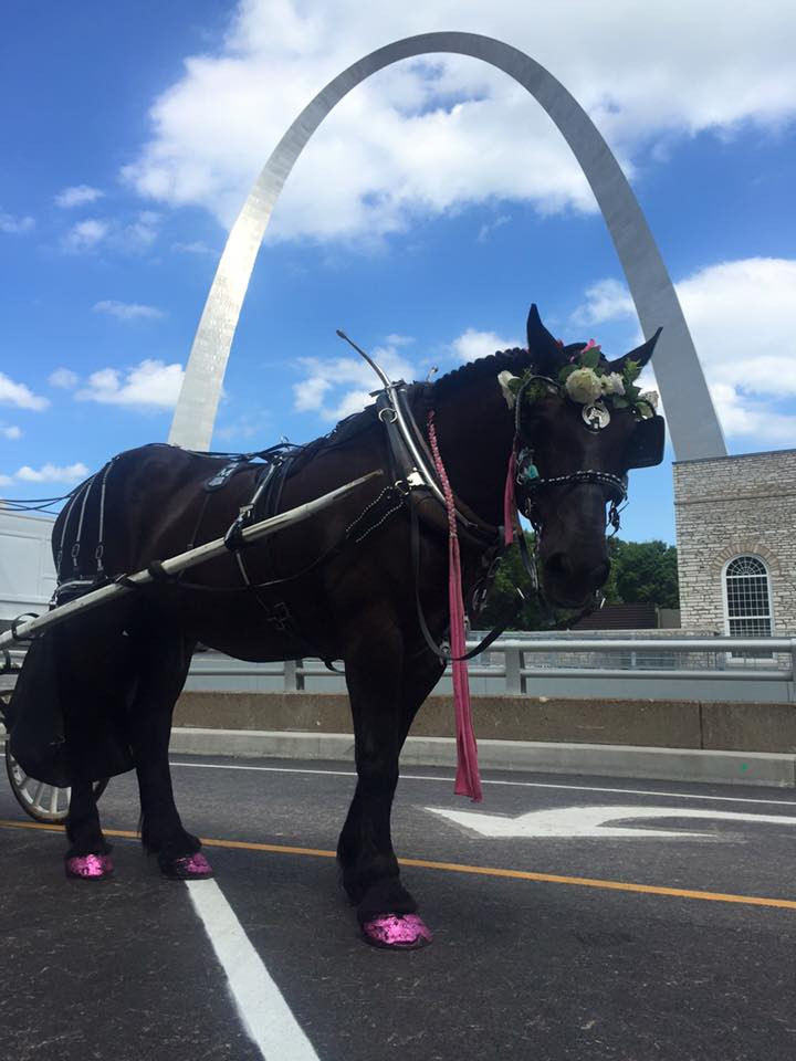 Brookdale Farms horse drawn carriage at St. Louis Arch