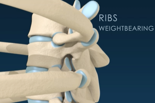 Biomechanics of the Bones Video