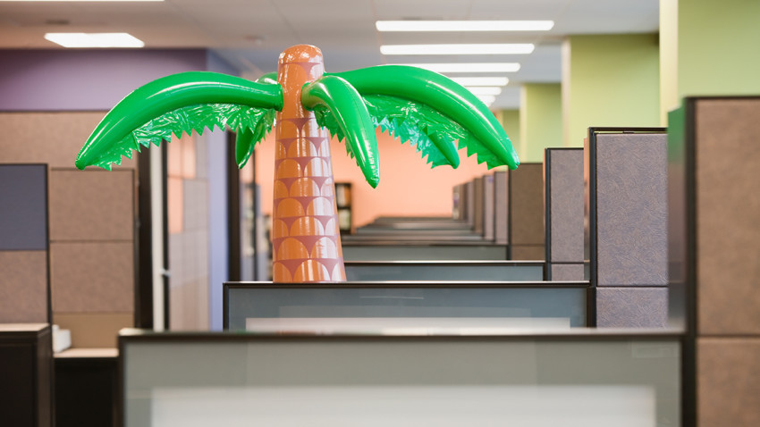 palm tree in office