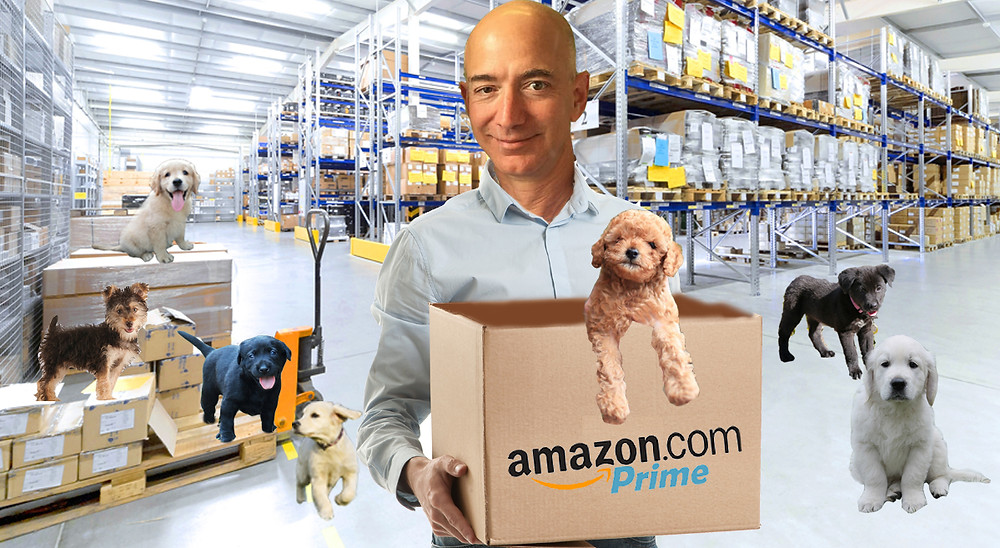 Amazon Puppy Store Jeff Bezos The Satirical Post