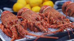karaka_lobster_video_still (9).jpg