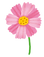 flower_cosmos.png
