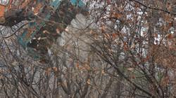 AKM TREE MULCHER (70)