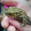 Toad.jpg