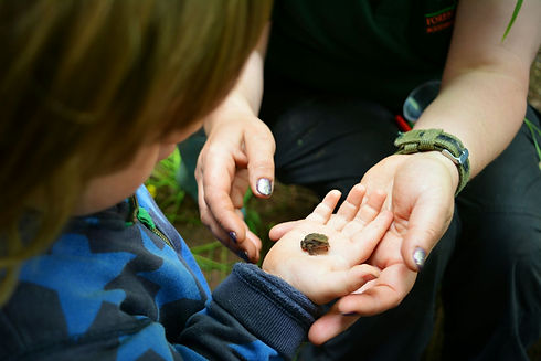 Baby Toad at the World Outside KIndergarten KIdderminster Worcestershire