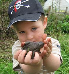 Jack toad crop.jpg