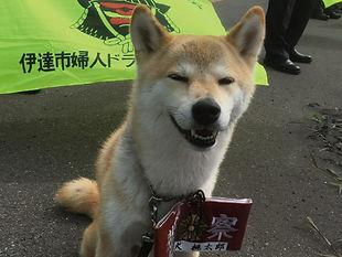 嘱託警察犬試験
