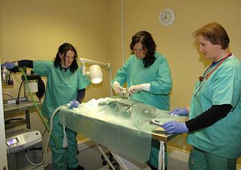 Newcastlewest Pet Vet Clinic Mary B Barrett MVB