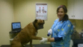 Newcastlewestpet vet clinic Mary B Barrett MVB