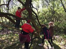 Forest School, children climbing a tree