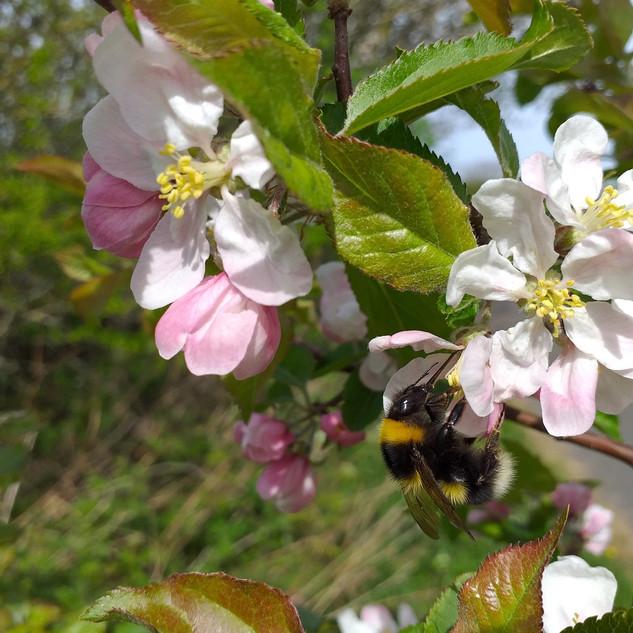 Get Cumbria Buzzing Flowers