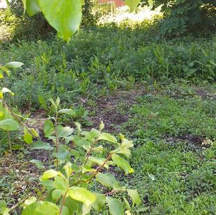 Bankfield Wildflower Patch